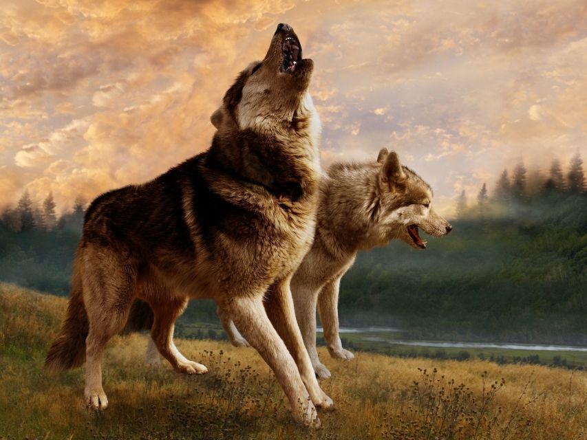 zwei Wölfe im Herzen